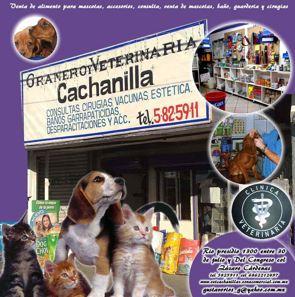 Baños Para Guarderia:de alimento, accesorios, consulta, venta de mascotas, baño, guarderia