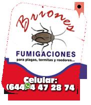 Fumigaciones-Briones